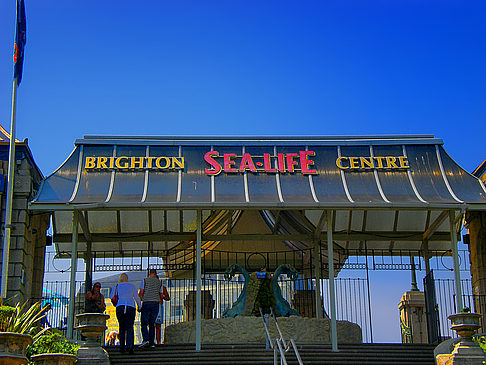 Sea Life Center - England (Brighton & Hove)