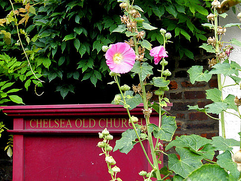 Chelsea Cheyne Walk - England (London)